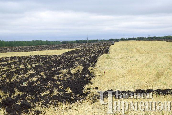 Квесеннему севу приступили 19 муниципальных образований области— Сводка сполей
